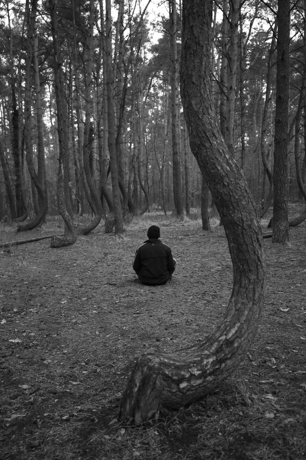 Oliver meditating in the Crooked Forest.