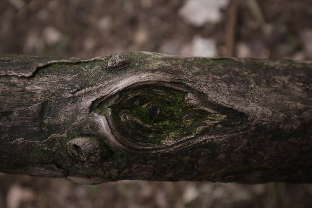 An eye in a branch - magic in nature.
