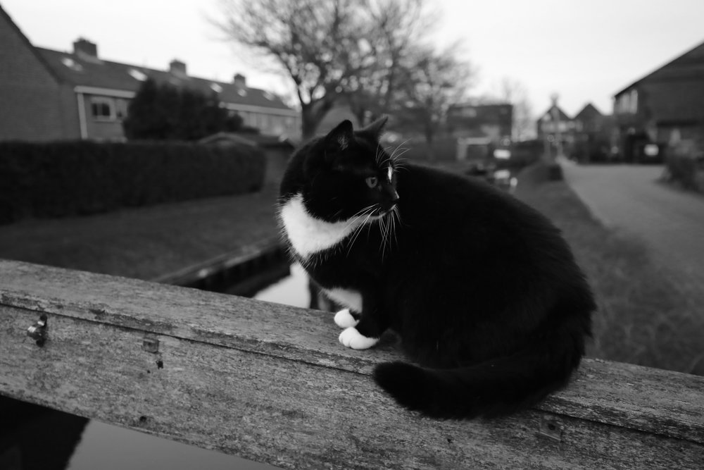 Cute black and white cat in the Dutch village of Giethoorn.