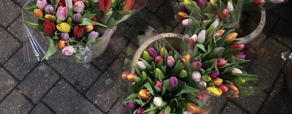 Bright rainbow tulips in buckets being sold in the markets of Amsterdam.