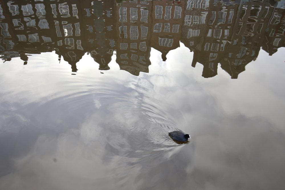 A duck makes waves through clouds and reflections of Amsterdam's houses.