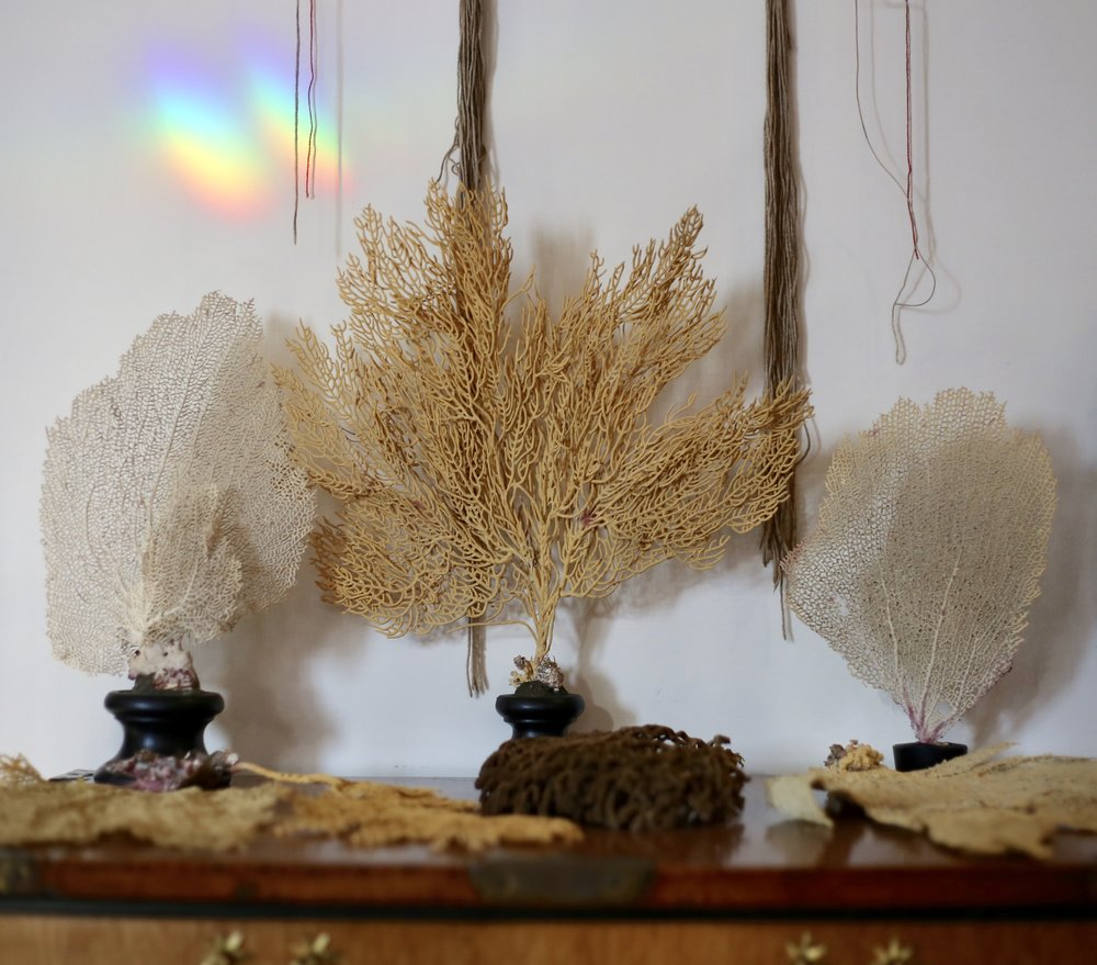 Pieces of coral and rainbows - a painter's collection.