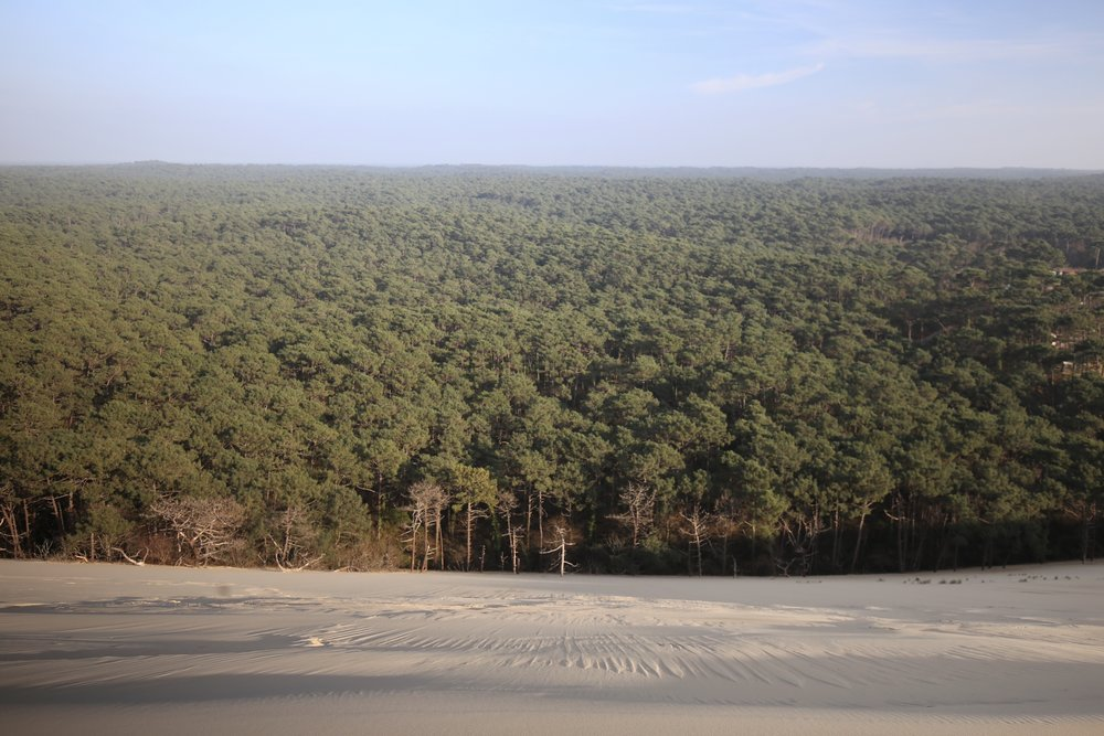 Looking down on the pine forest below the Dune du Pilat, France.