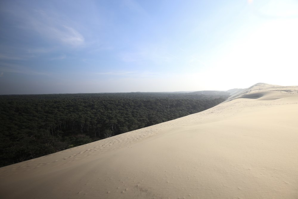 The giant sand Dune du Pilat, looming over the forest.