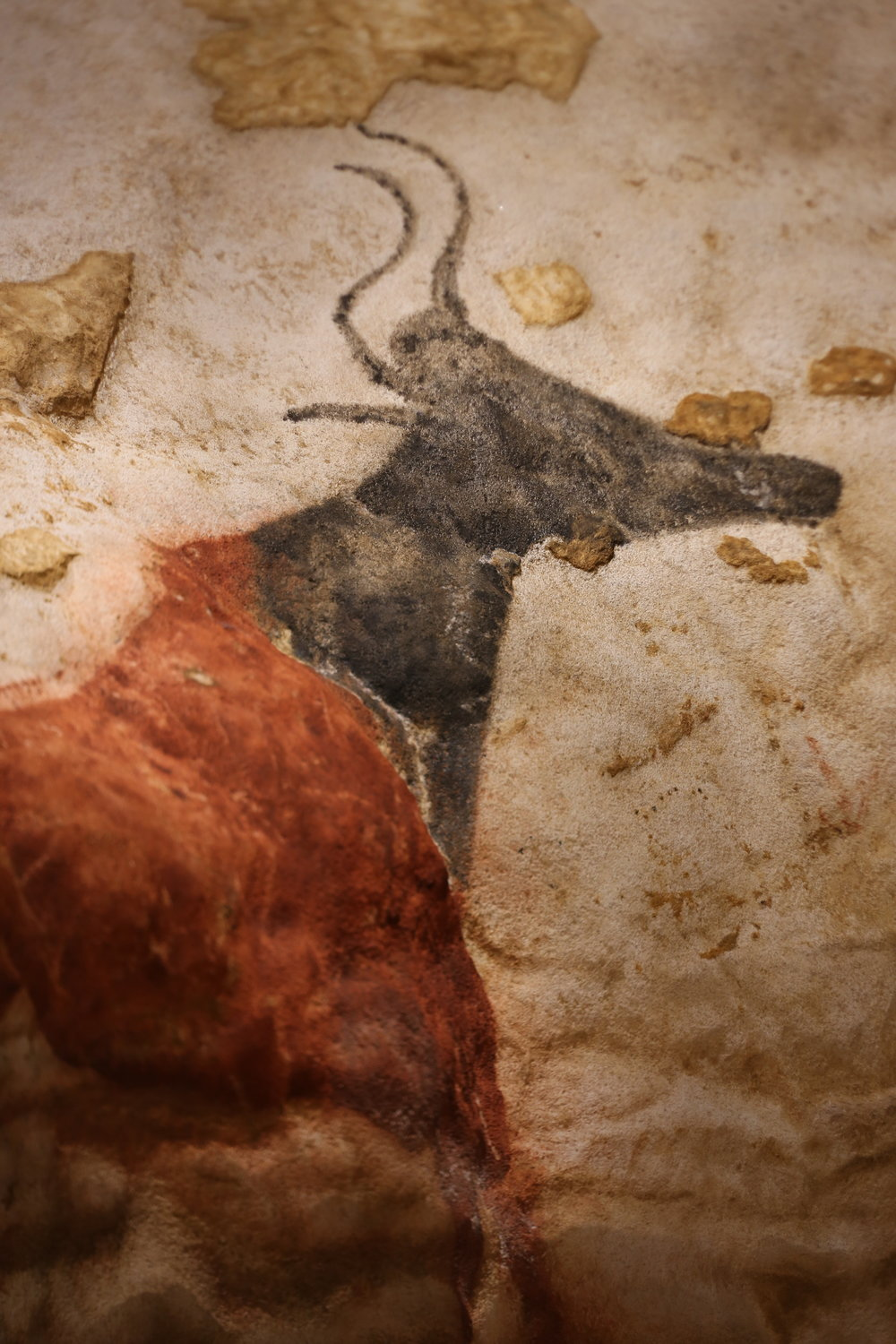 A beautiful prehistoric painting of a cow with horns, from Lascaux cave.
