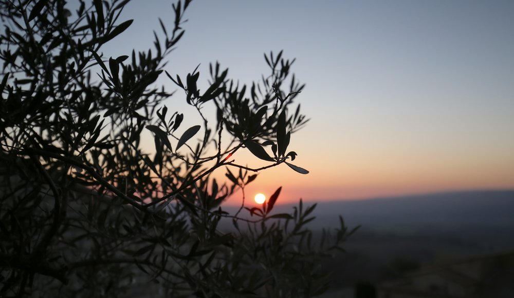 Sunset over the olive trees of Provence.