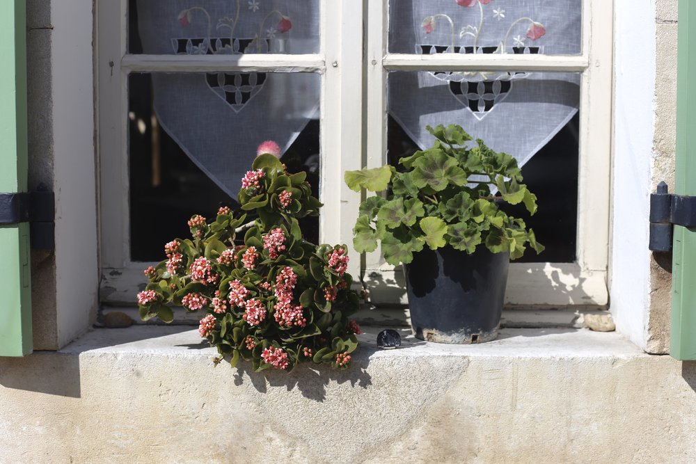 Window flower boxes and mint shutters, Provence.
