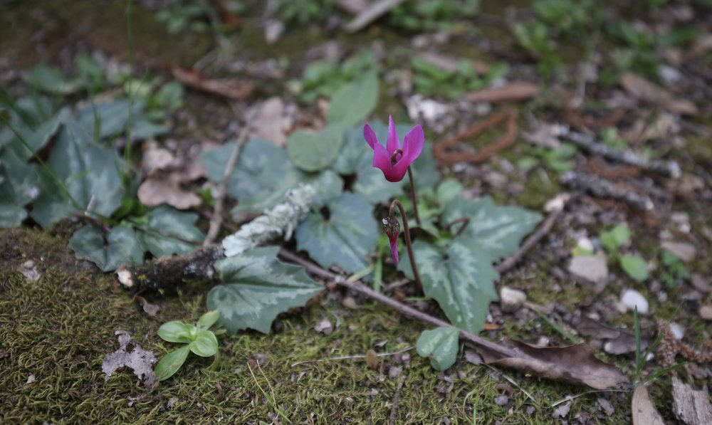 Small pink wildflowers growing on the mossy forest floor.