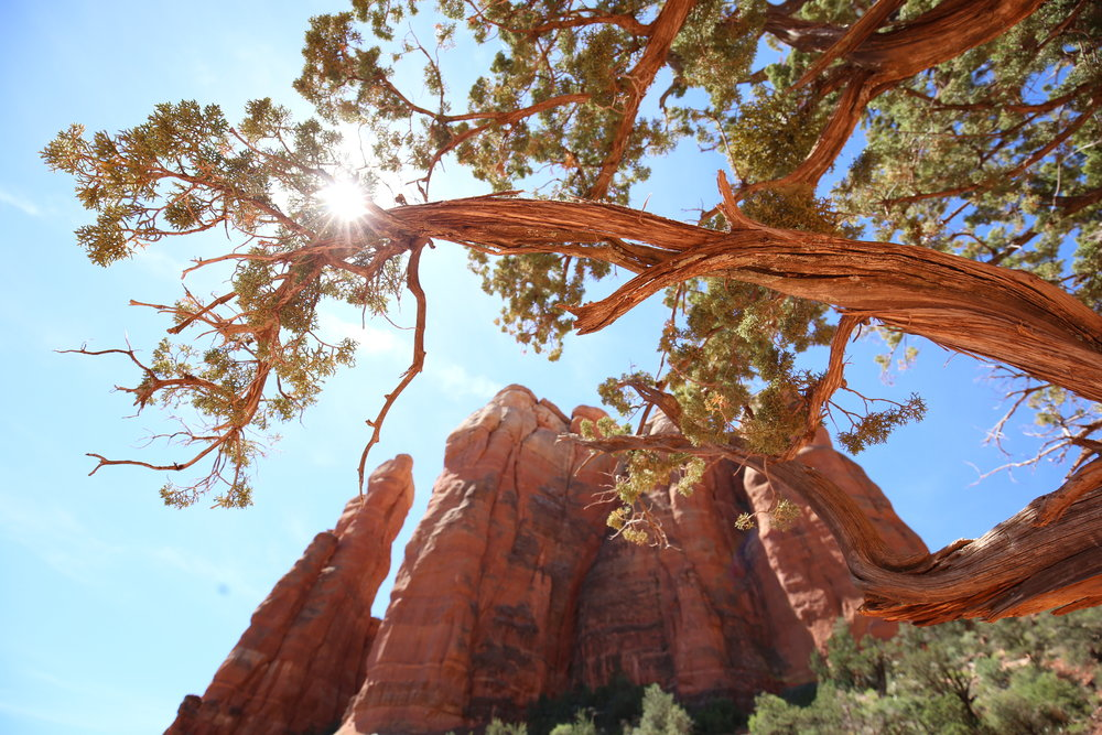 Sun bursts coming through the pinion trees of Cathedral Rock.