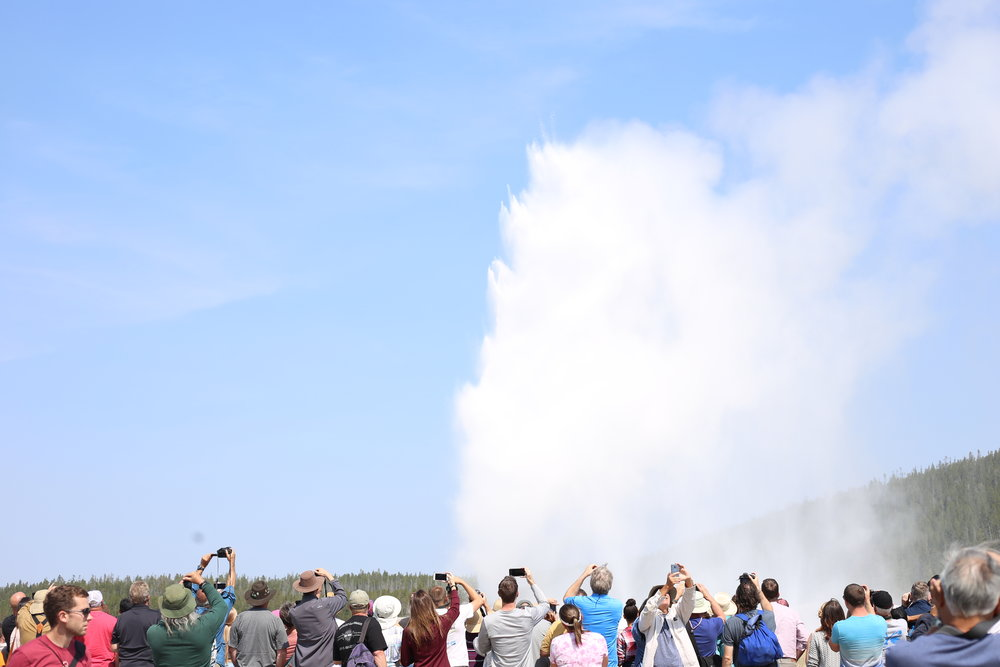 old faithful geyser and crowds