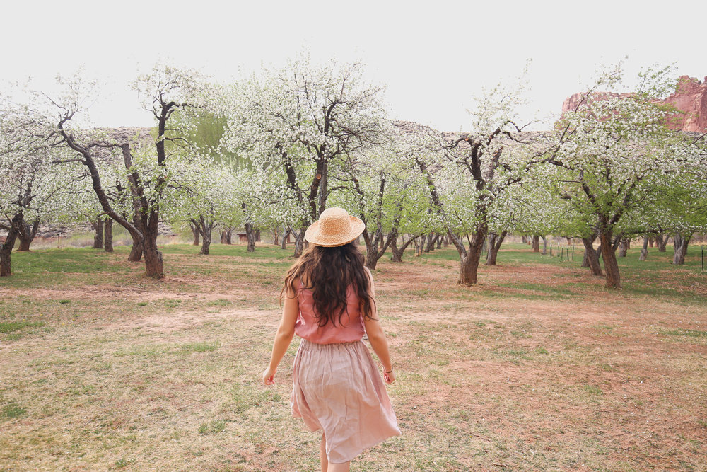 orchard-capitol-reef