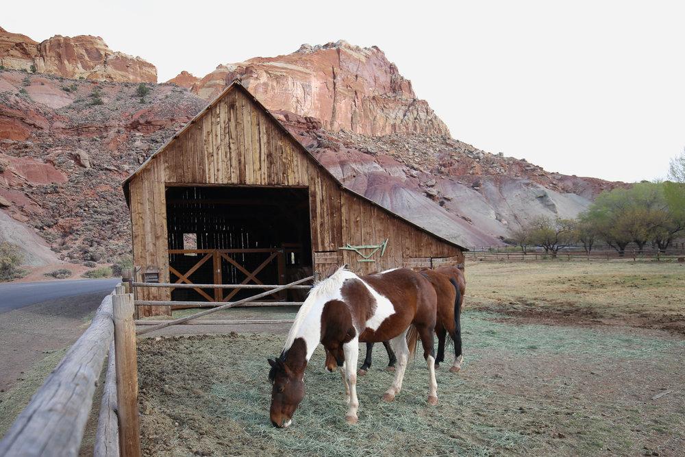 capitol-reef-horses