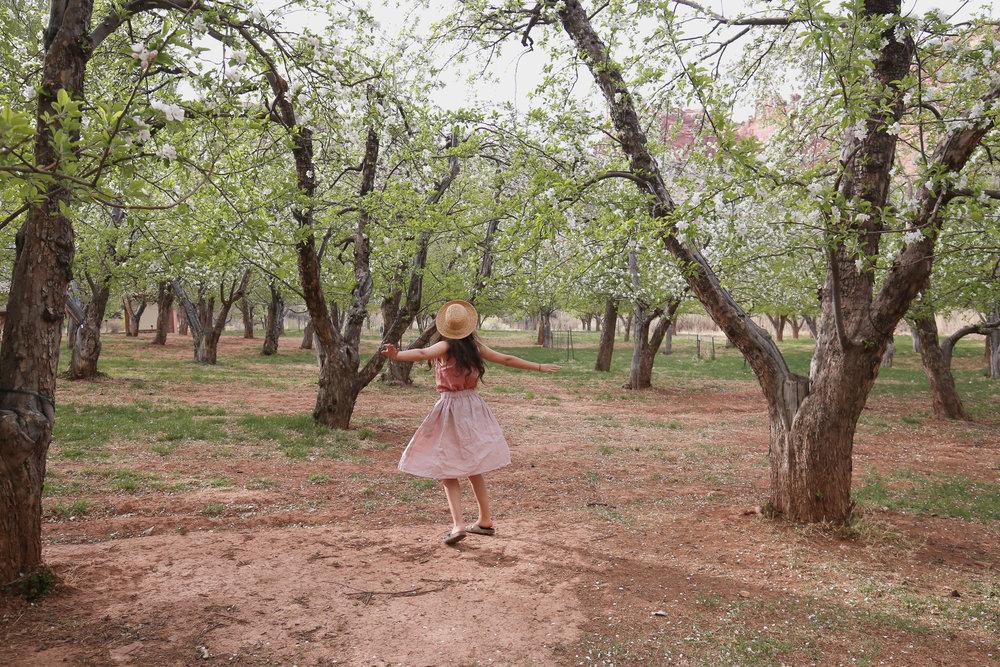 dancing-cherry-blossom