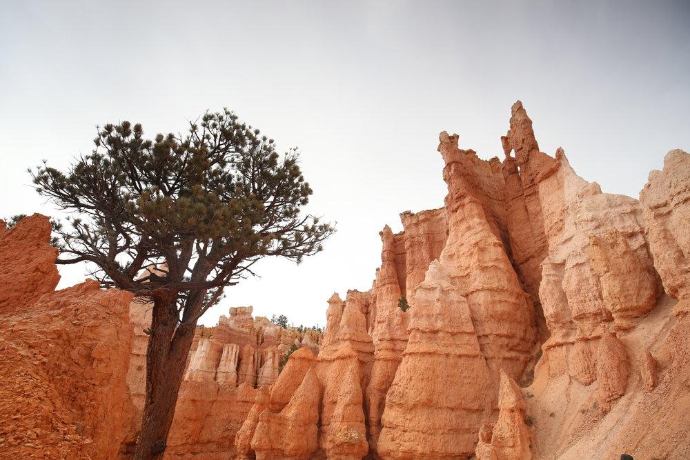 inside-bryce-canyon