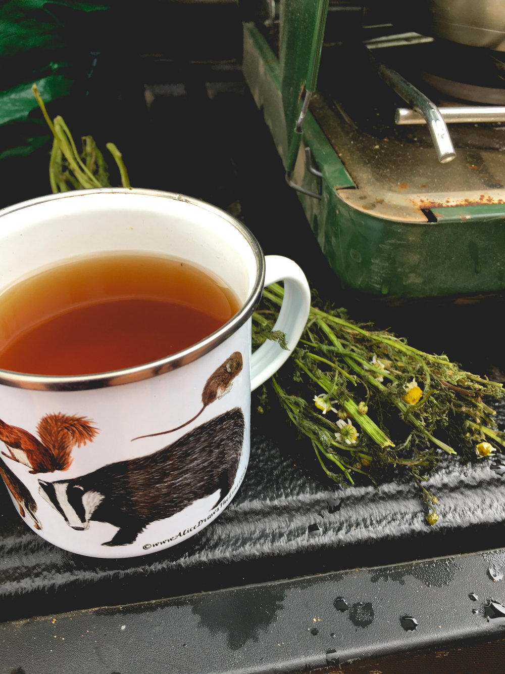 foraged-mormon-tea