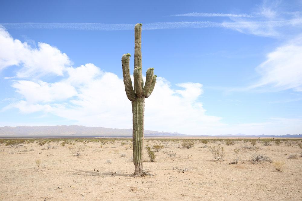 saguaro-cactus-az-desert