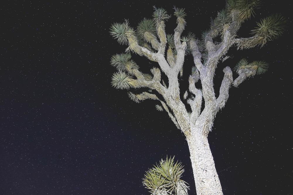 joshua-tree-night-sky