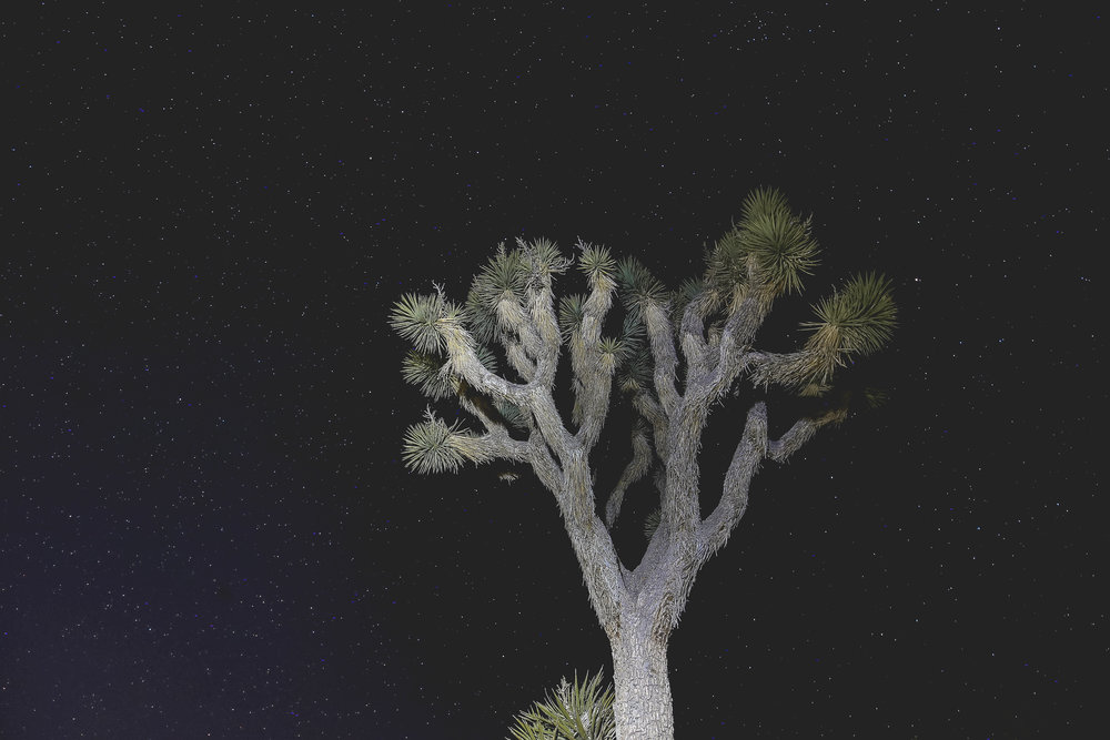 joshua-tree-stars-night-sky