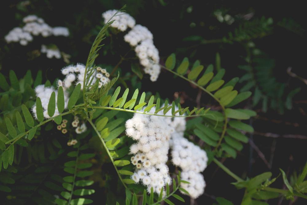white-beach-flowers