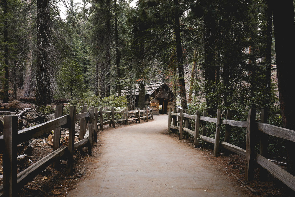 squatters-cabin-sequoia-national-park