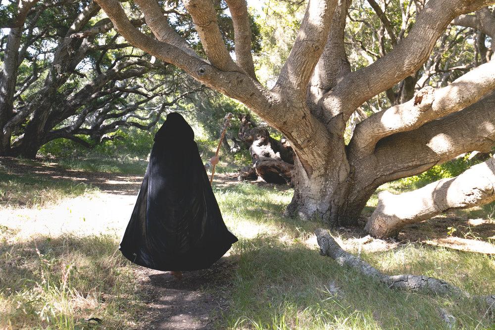 wizard-in-an-oak-grove