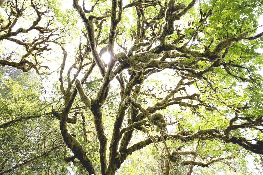 prairie-creek-redwoods