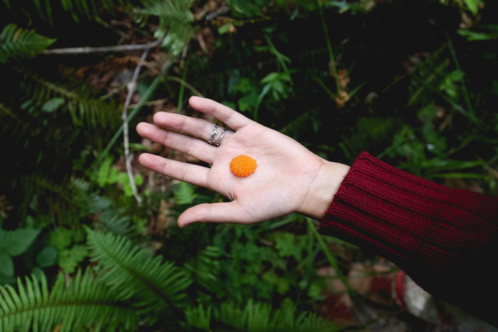 orange-salmonberry-redwoods