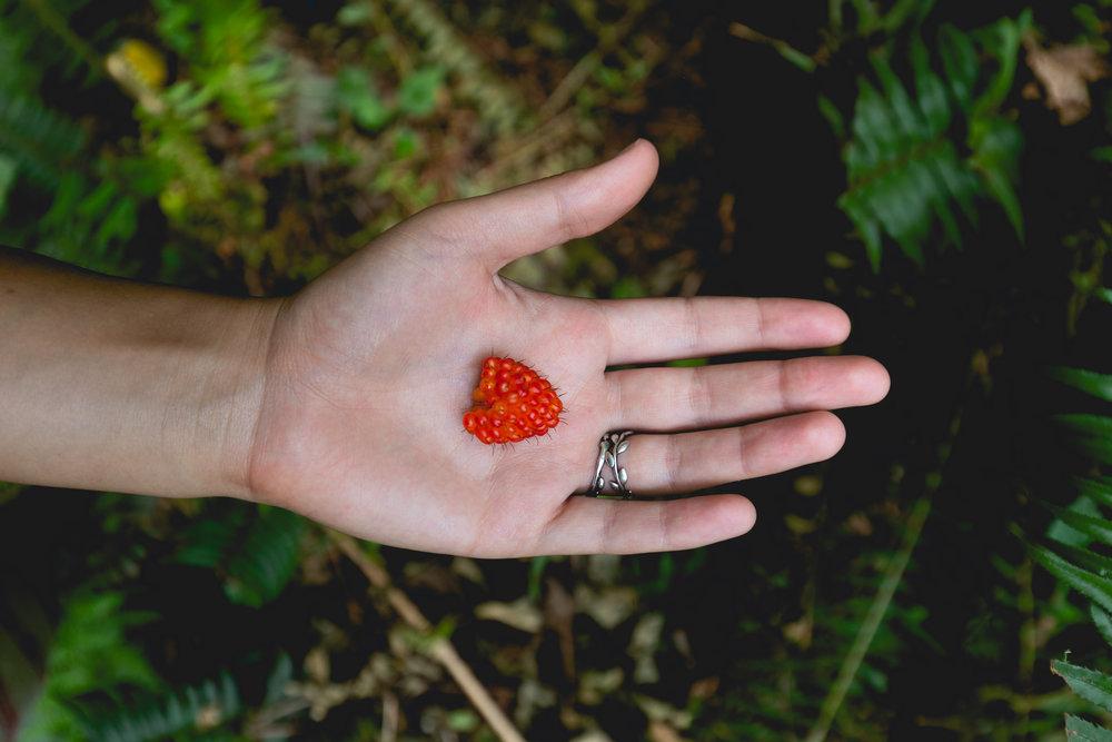 glistening-salmonberry-redwoods-foraging