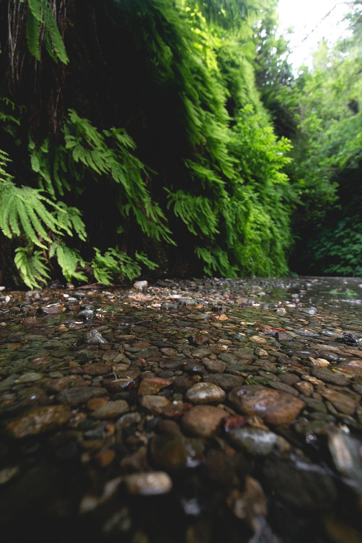 fern-canyon-prairie-creek
