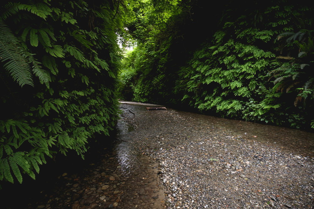 fern-canyon-prairie-creek-redwoods