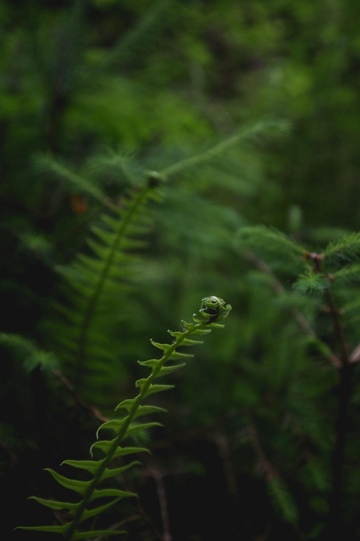 fern-frond-redwoods-park