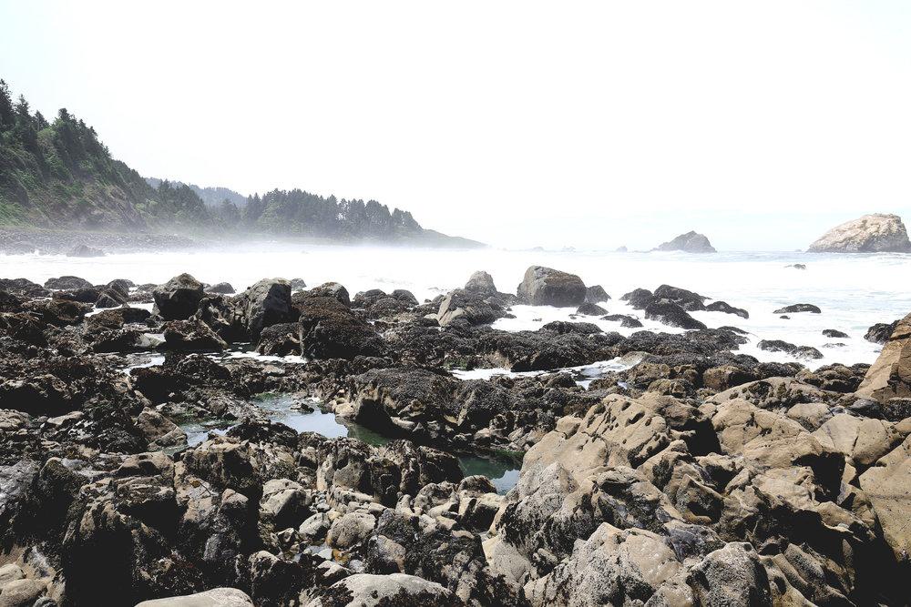 mist-on-coast-redwoods-park