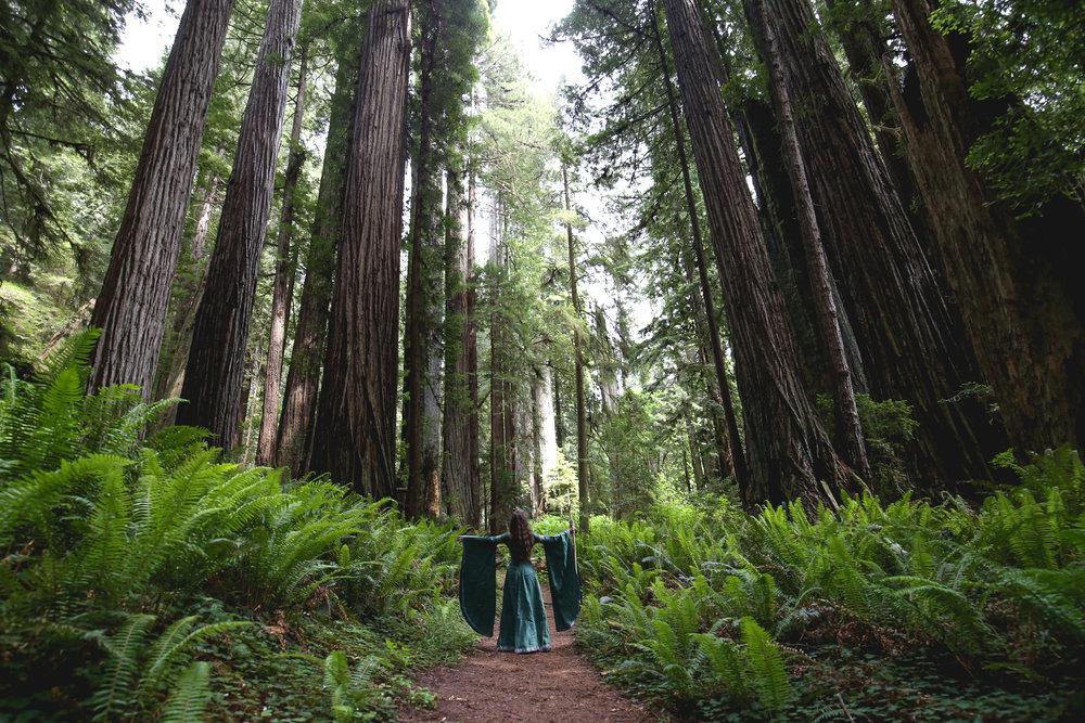 wood-elf-redwoods-park