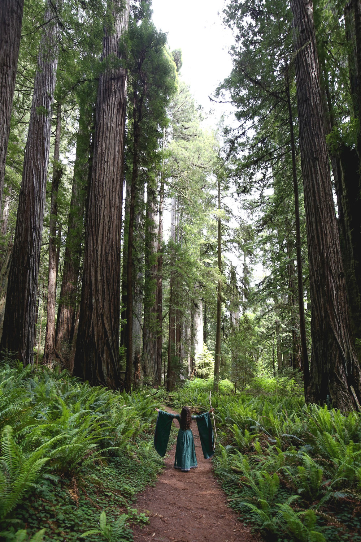 redwoods-tree-worship