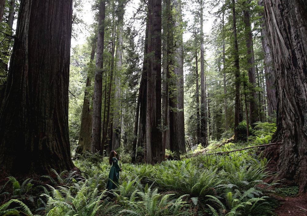 redwoods-forest-goddess-portrait