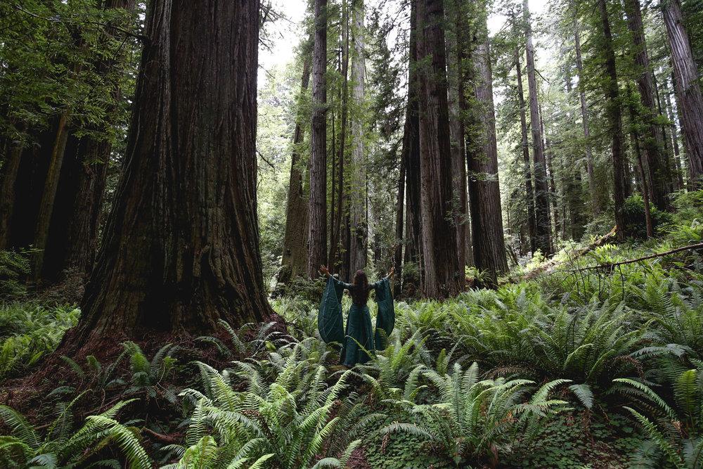 redwood-forest-elven-queen