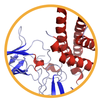 Molecular Design.png
