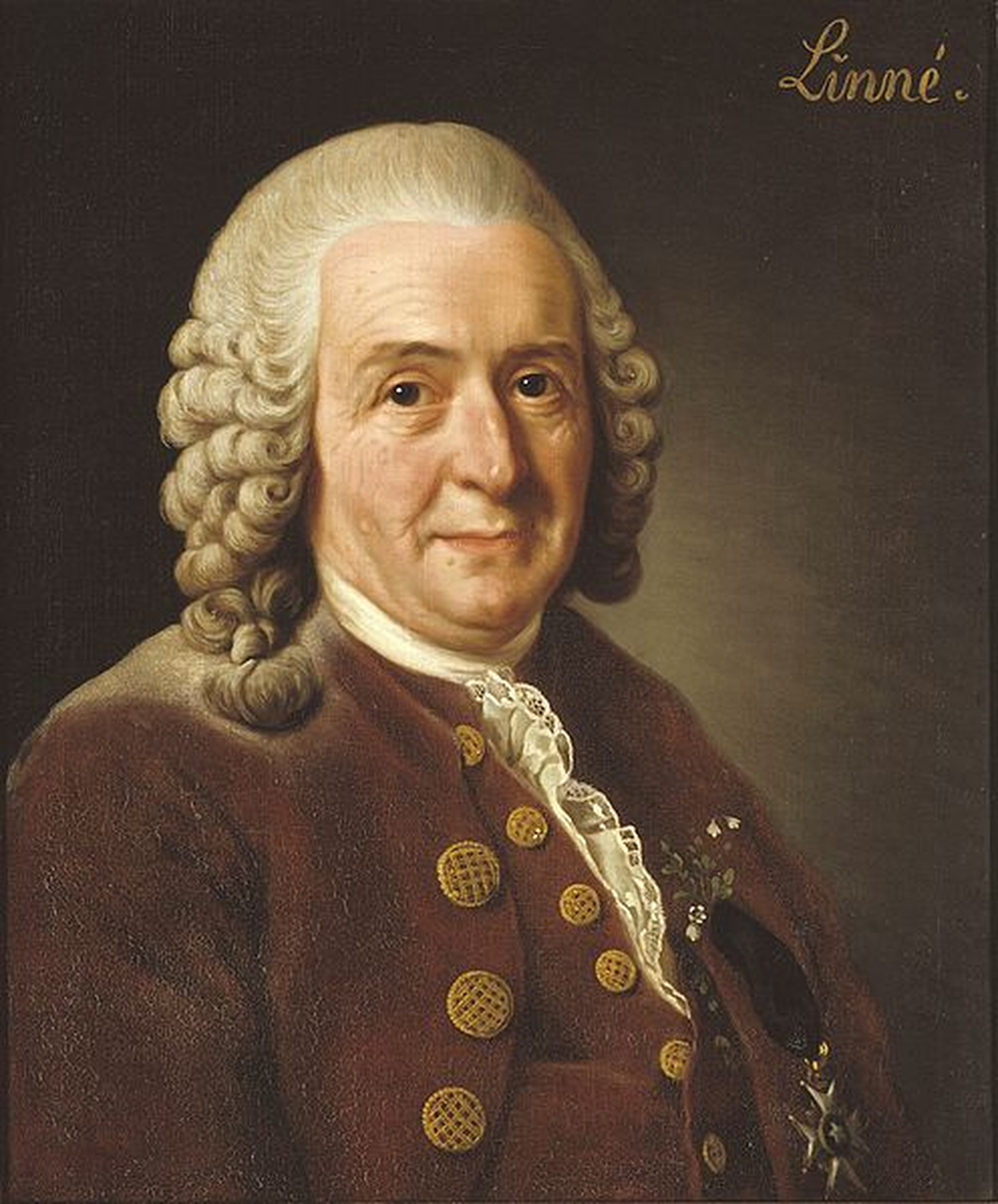 According to the paper, Carl von Linné, the Swedish botanist and father of taxonomy, would be a computational biologist today.  Image credit:  Nationalmuseum Stockholm .