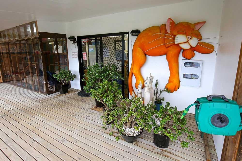 cat+front+entrance.jpg