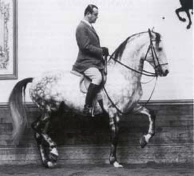 d6d7f22453b35ba3474fc17f8d9eb260--nuno-vintage-horse.jpg