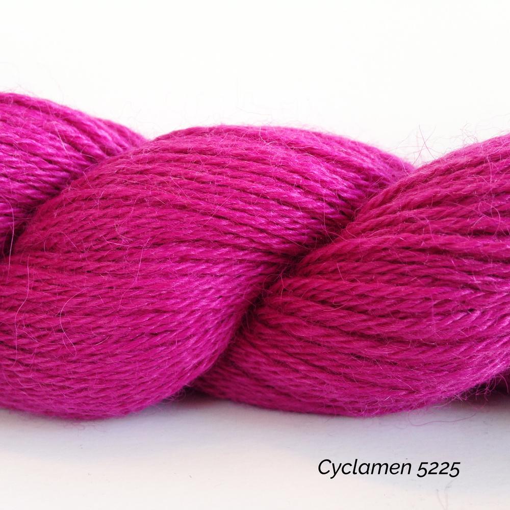 5225 Cyclamen.JPG