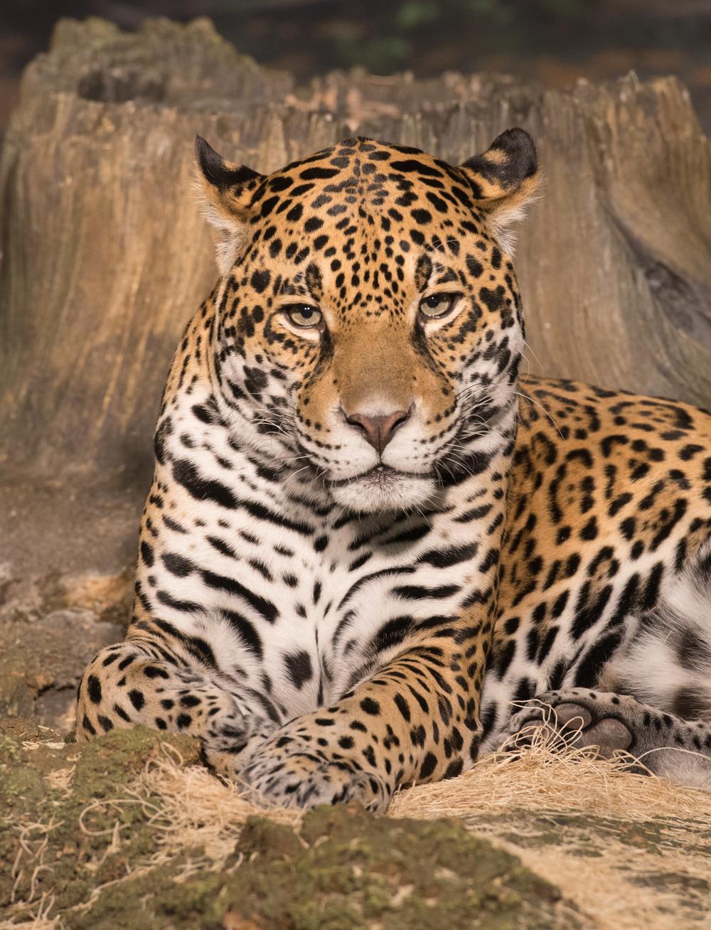 zoo-024.jpg