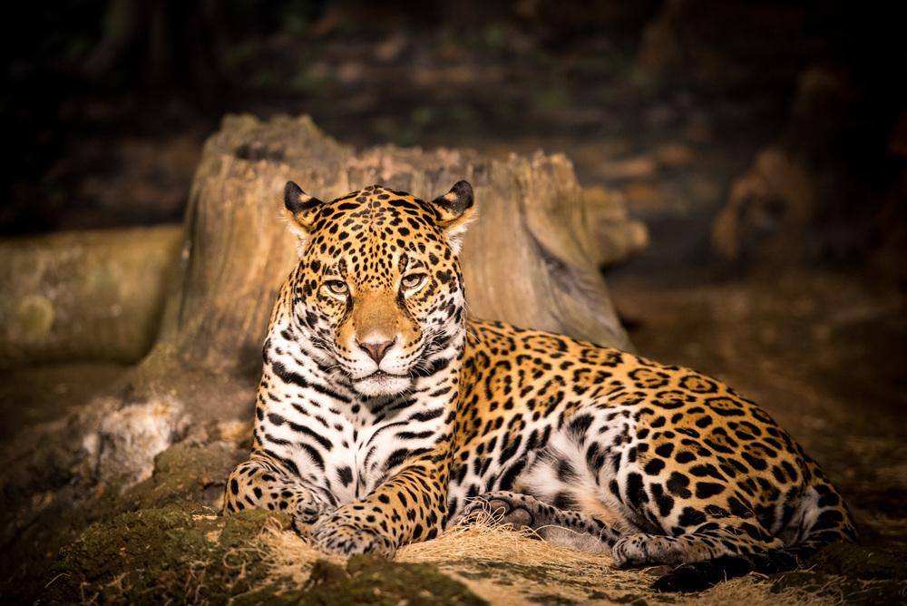 zoo-025.jpg