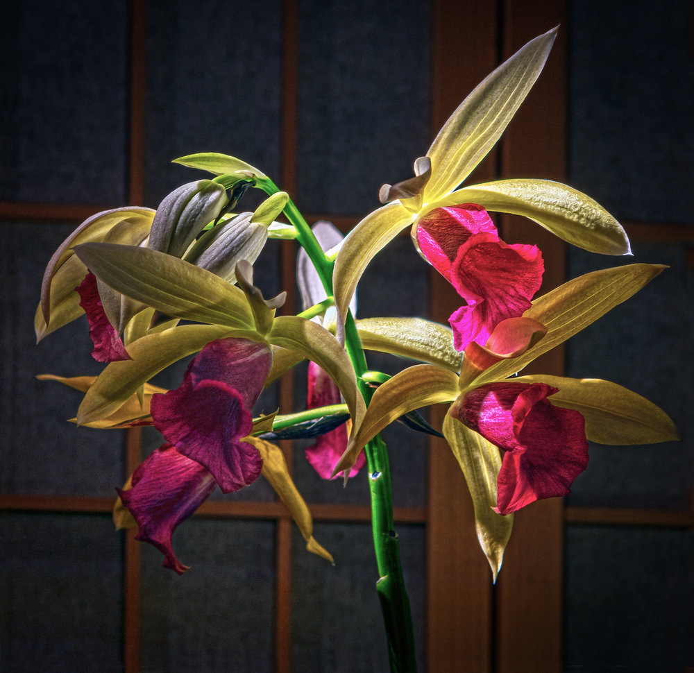 Orchid_HDR4.jpg