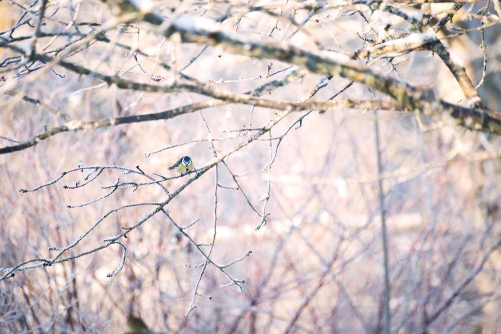 winter-1-8.jpg