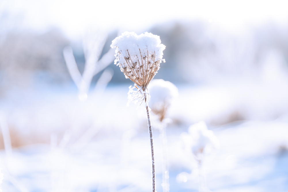 winter-1-9.jpg