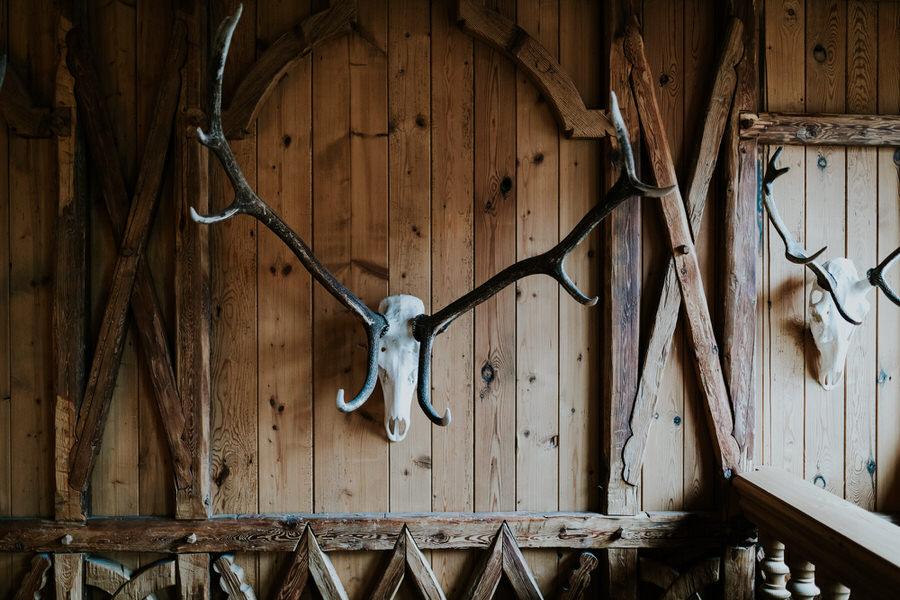 Geweihe des Tieres auf der Holzwand