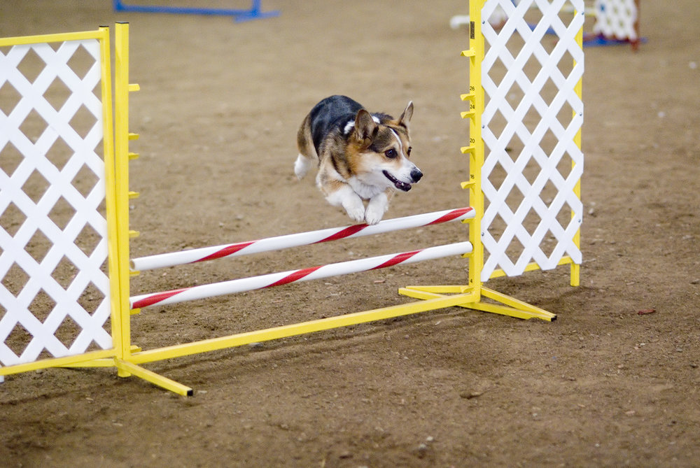 I added this because it's a Corgie jumping his hurdle. And, if he can do it, you can to!