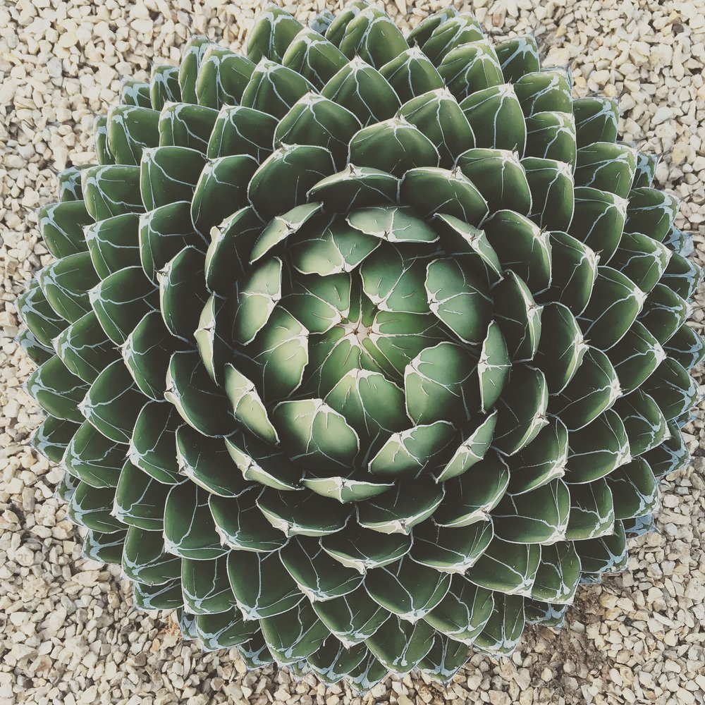 North Park Succulent