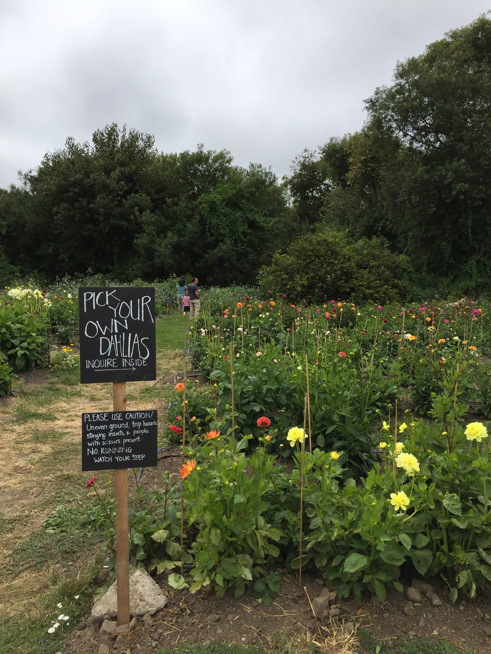 The Pescadero Flowery: U-Pick Dahlia farm + floral workshops